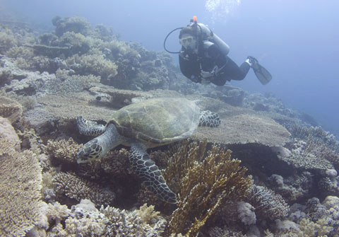 Nicola diving with a Red Sea turtle